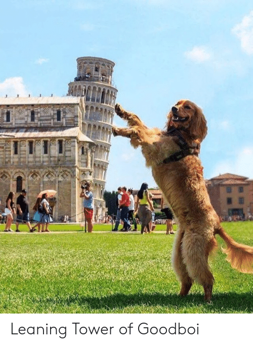 leaning tower: Leaning Tower of Goodboi
