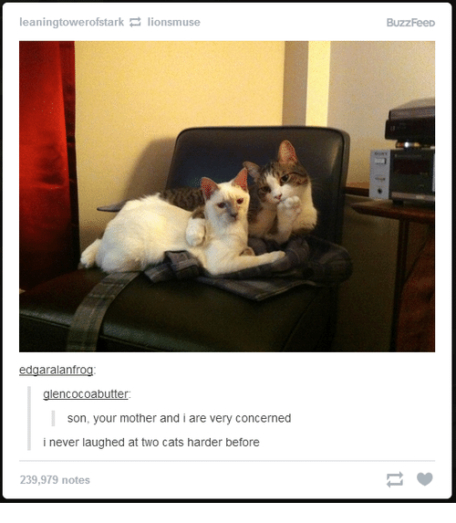 Motheres: leaningtowerofstark lionsmuse  edgaralanfrog  glencocoabutter:  son, your mother and i are very concerned  i never laughed at two cats harder before  239,979 notes  BuzzFeeD