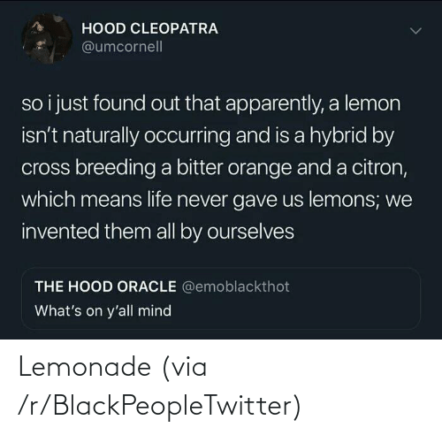 blackpeopletwitter: Lemonade (via /r/BlackPeopleTwitter)
