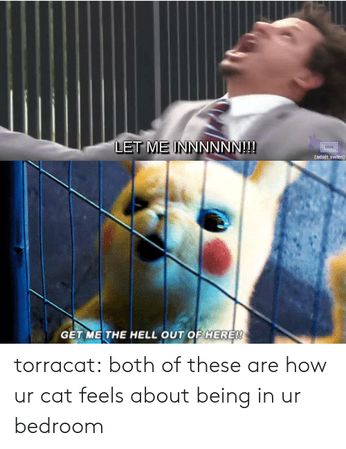 Tumblr, Adult Swim, and Blog: LET ME INN  NNNN!!  adult swim)   GET ME THE HELL OUT OF HERE! torracat:  both of these are how ur cat feels about being in ur bedroom