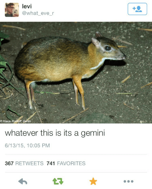Gemini: levi  @what_eve_r  ©Klaus R  in  whatever this is its a gemini  6/13/15, 10:05 PM  367 RETWEETS 741 FAVORITES