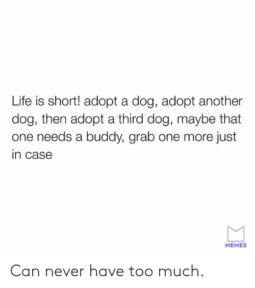 Dank, Life, and Memes: Life is short! adopt a dog, adopt another  dog, then adopt a third dog, maybe that  one needs a buddy, grab one more just  in case  MEMES Can never have too much.