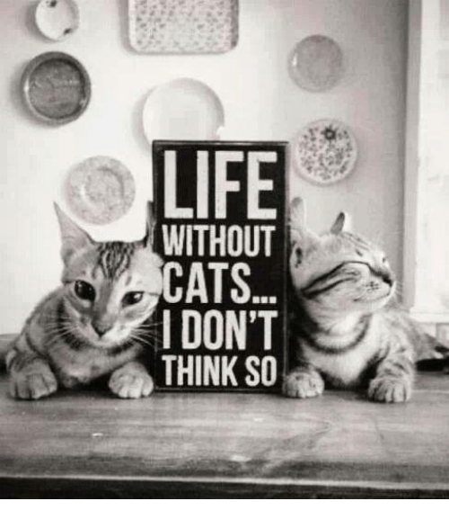Cats, Life, and Memes: LIFE  WITHOUT  CATS..  I DON'T  THINK SO