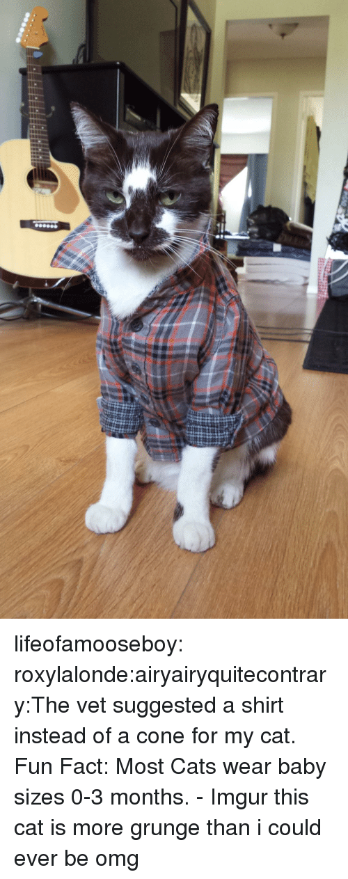 grunge: lifeofamooseboy:  roxylalonde:airyairyquitecontrary:The vet suggested a shirt instead of a cone for my cat. Fun Fact: Most Cats wear baby sizes 0-3 months. - Imgur this cat is more grunge than i could ever be  omg