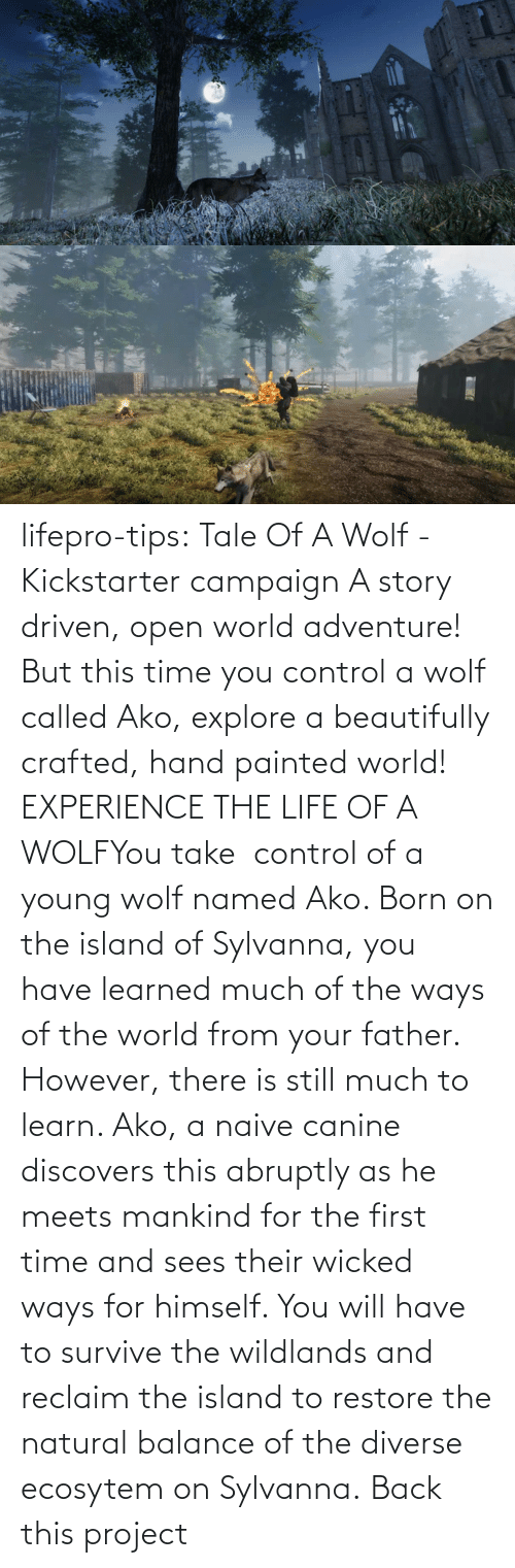 born: lifepro-tips: Tale Of A Wolf - Kickstarter campaign   A story driven, open world adventure! But this time you control a wolf  called Ako, explore a beautifully crafted, hand painted world! EXPERIENCE THE LIFE OF A WOLFYou take  control of a young wolf named Ako. Born on the island  of Sylvanna, you have learned much of the ways of the world from your  father. However, there is still much to learn. Ako, a naive canine  discovers this abruptly as he meets mankind for the first time and sees  their wicked ways for himself. You will have to survive the wildlands  and reclaim the island to restore the natural balance of the diverse  ecosytem on Sylvanna.   Back this project