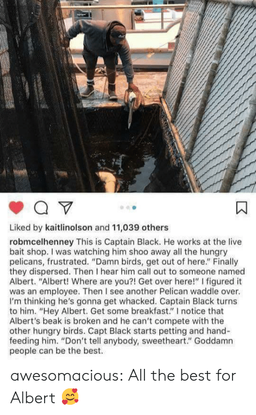 """sweetheart: Liked by kaitlinolson and 11,039 others  robmcelhenney This is Captain Black. He works at the live  bait shop. I was watching him shoo away all the hungry  pelicans, frustrated. """"Damn birds, get out of here."""" Finally  they dispersed. Then I hear him call out to someone named  Albert. """"Albert! Where are you?! Get over here!"""" I figured it  was an employee. Then I see another Pelican waddle over.  I'm thinking he's gonna get whacked. Captain Black turns  to him. """"Hey Albert. Get some breakfast."""" I notice that  Albert's beak is broken and he can't compete with the  other hungry birds. Capt Black starts petting and hand-  feeding him. """"Don't tell anybody, sweetheart."""" Goddamn  people can be the best. awesomacious:  All the best for Albert 🥰"""