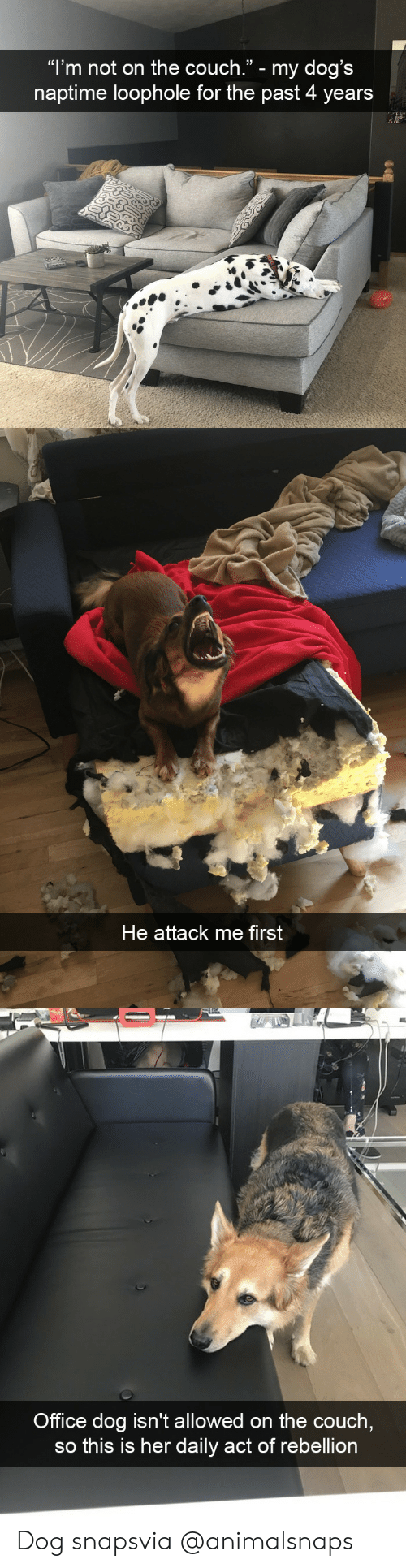 """Dogs, Target, and Tumblr: """"l'm not on the couch."""" - my dog's  naptime loophole for the past 4 years   He attack me first   Office dog isn't allowed on the couch  so this is her daily act of rebellion Dog snapsvia @animalsnaps"""