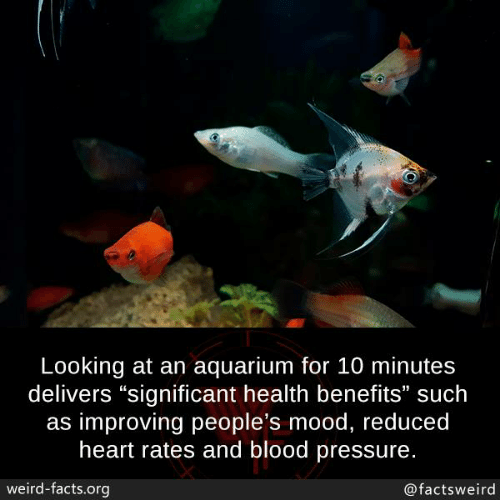"Facts, Memes, and Mood: Looking at an aquarium for 10 minutes  delivers ""significant health benefits"" such  as improving people's mood, reduced  heart rates and blood pressure.  weird-facts.org  @factsweird"
