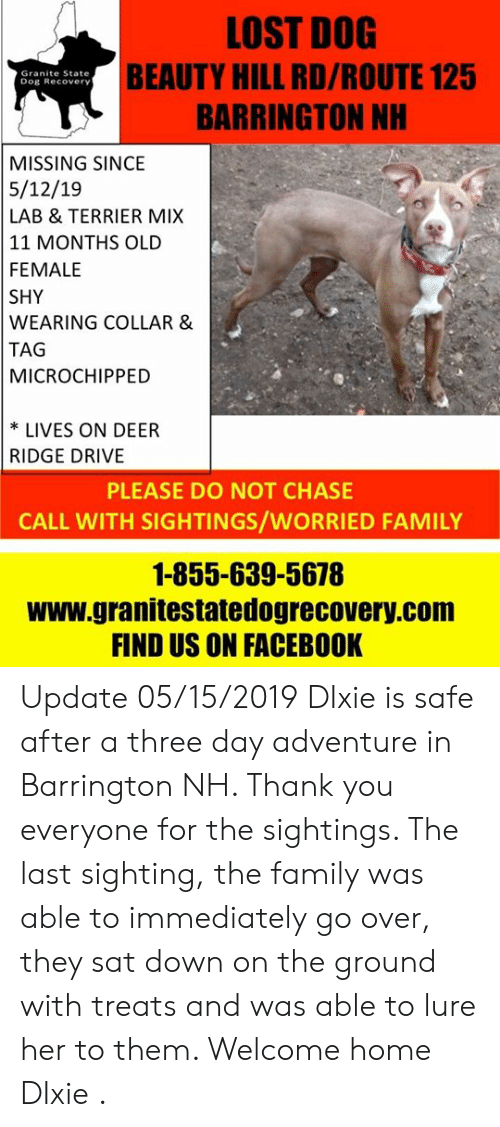 Deer, Facebook, and Family: LOST DOG  BEAUTY HILL RD/ROUTE 125  BARRINGTON NH  Granite State  Dog Recovery  MISSING SINCE  5/12/19  LAB & TERRIER MIX  11 MONTHS OLD  FEMALE  SHY  WEARING COLLAR &  TAG  MICROCHIPPED  * LIVES ON DEER  RIDGE DRIVE  PLEASE DO NOT CHASE  CALL WITH SIGHTINGS/WORRIED FAMILY  1-855-639-5678  www.granitestatedogrecovery.com  FIND US ON FACEBOOK Update 05/15/2019 DIxie is safe after a three day adventure in Barrington NH. Thank you everyone for the sightings. The last sighting, the family was able to immediately go over, they sat down on the ground with treats and was able to lure her to them. Welcome home DIxie .