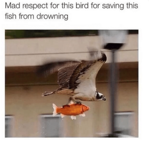 Respect, Fish, and Mad: Mad respect for this bird for saving this  fish from drowning