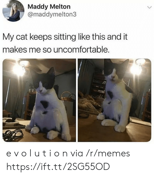 I O: Maddy Melton  @maddymelton3  My cat keeps sitting like this and it  makes me so uncomfortable. e v o l u t i o n via /r/memes https://ift.tt/2SG55OD