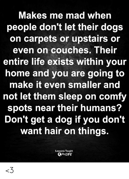Dogs, Life, and Memes: Makes me mad when  people don't let their dogs  on carpets or upstairs or  even on couches. Their  entire life exists within your  home and you are going to  make it even smaller and  not let them sleep on comfy  spots near their humans?  Don't get a dog if you don't  want hair on things.  Lessons Taught  By LIFE <3