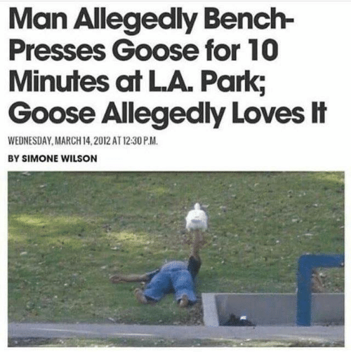Wednesday: Man Allegedly Bench-  Presses Goose for 10  Minutes at LA. Park,  Goose Allegedly Loves It  WEDNESDAY, MARCH 14,2012 AT 12:30 P.M.  BY SIMONE WILSON