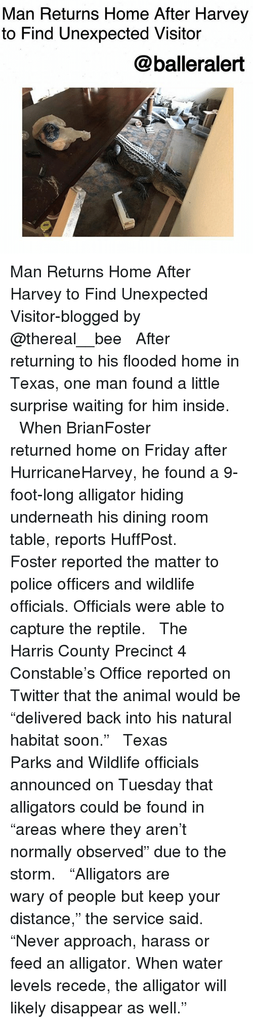 """homed: Man Returns Home After Harvey  to Find Unexpected Visitor  @balleralert Man Returns Home After Harvey to Find Unexpected Visitor-blogged by @thereal__bee ⠀⠀⠀⠀⠀⠀⠀⠀⠀ ⠀⠀ After returning to his flooded home in Texas, one man found a little surprise waiting for him inside. ⠀⠀⠀⠀⠀⠀⠀⠀⠀ ⠀⠀ When BrianFoster returned home on Friday after HurricaneHarvey, he found a 9-foot-long alligator hiding underneath his dining room table, reports HuffPost. ⠀⠀⠀⠀⠀⠀⠀⠀⠀ ⠀⠀ Foster reported the matter to police officers and wildlife officials. Officials were able to capture the reptile. ⠀⠀⠀⠀⠀⠀⠀⠀⠀ ⠀⠀ The Harris County Precinct 4 Constable's Office reported on Twitter that the animal would be """"delivered back into his natural habitat soon."""" ⠀⠀⠀⠀⠀⠀⠀⠀⠀ ⠀⠀ Texas Parks and Wildlife officials announced on Tuesday that alligators could be found in """"areas where they aren't normally observed"""" due to the storm. ⠀⠀⠀⠀⠀⠀⠀⠀⠀ ⠀⠀ """"Alligators are wary of people but keep your distance,"""" the service said. """"Never approach, harass or feed an alligator. When water levels recede, the alligator will likely disappear as well."""""""
