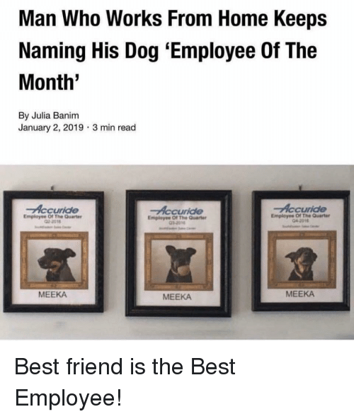 Best Friend, Best, and Home: Man Who Works From Home Keeps  Naming His Dog 'Employee Of The  Month'  By Julia Banim  January 2, 2019  3 min read  Accuride  Employee Of The Quarter  Employee Of The Quarte  2-2018  Employee Of The Quarter  MEEKA  MEEKA  MEEKA Best friend is the Best Employee!