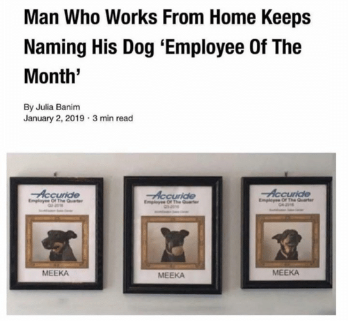 Dank, Home, and 🤖: Man Who Works From Home Keeps  Naming His Dog 'Employee Of The  Month'  By Julia Banim  January 2, 2019 3 min read  Emplayee Of The Quar  MEEKA  MEEKA  MEEKA