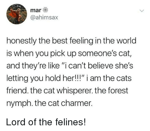 "Cats, Memes, and Best: mar  @ahimsax  honestly the best feeling in the world  is when you pick up someone's cat,  and they're like ""i can't believe she's  letting you hold her!!!"" i am the cats  friend. the cat whisperer. the forest  nymph. the cat charmer. Lord of the felines!"
