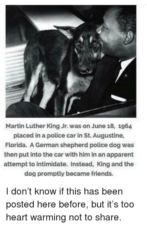 apparent: Martin Luther King Jr. was on June 18, 1964  placed in a police car in St. Augustine,  Florida. A German shepherd police dog was  then put into the car with him in an apparent  attempt to intimidate. Instead, King and the  dog promptly became friends. I don't know if this has been posted here before, but it's too heart warming not to share.
