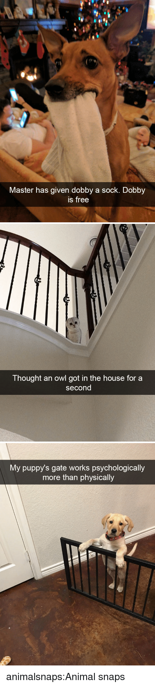 Target, Tumblr, and Animal: Master has given dobby a sock. Dobby  s free   Thought an owl got in the house for a  second   My puppy's gate works psychologically  more than physically animalsnaps:Animal snaps