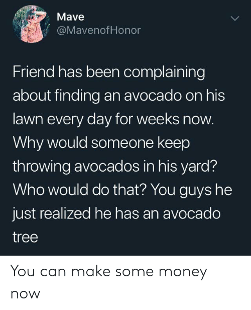 Money, Avocado, and Tree: Mave  @MavenofHonor  Friend has been complaining  about finding an avocado on his  lawn every day for weeks now.  Why would someone keep  throwing avocados in his yard?  Who would do that? You guys he  just realized he has an avocado  tree You can make some money now