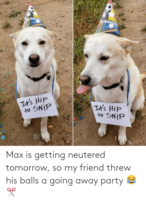 Tomorrow: Max is getting neutered tomorrow, so my friend threw his balls a going away party 😂✂️