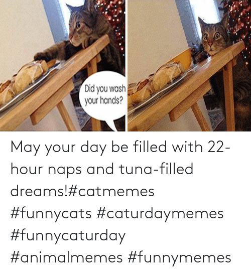 may: May your day be filled with 22-hour naps and tuna-filled dreams!#catmemes #funnycats #caturdaymemes #funnycaturday #animalmemes #funnymemes
