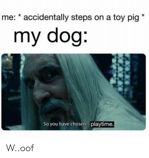 You Have: me: * accidentally steps on a toy pig  my dog:  So you have chosen. playtime. W..oof