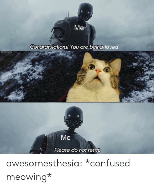 Please Do: Me  Congratulations! You are beîng loved  REYISBAEOK  Me  Please do not resist.  uapiocinokch awesomesthesia:  *confused meowing*