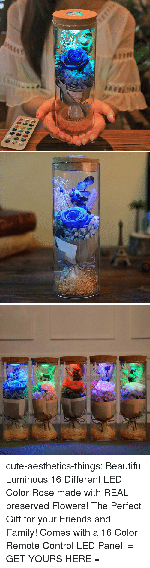 Beautiful, Cute, and Family: me cute-aesthetics-things:  Beautiful Luminous 16 Different LED Color Rose made with REAL preserved Flowers! The Perfect Gift for your Friends and Family! Comes with a 16 Color Remote Control LED Panel! = GET YOURS HERE =