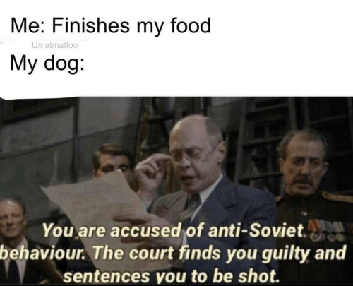 court: Me: Finishes my food  U/natmatfoo  My dog:  You are accused of anti-Soviet.  behaviour. The court finds you guilty and  sentences you to be shot.