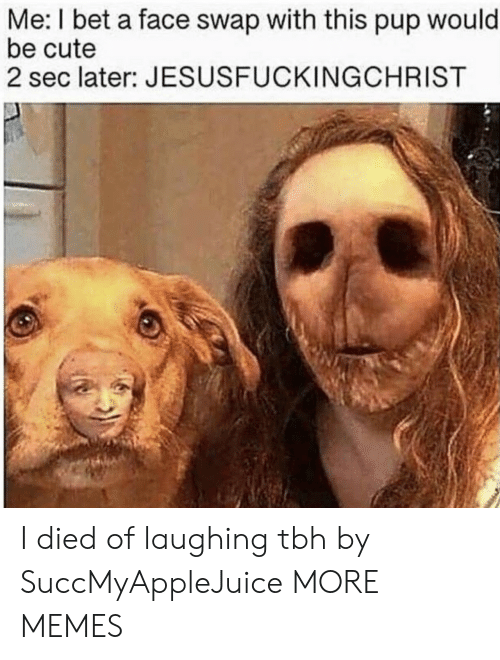 Cute, Dank, and I Bet: Me: I bet a face swap with this pup would  be cute  2 sec later: JESUSFUCKINGCHRIST I died of laughing tbh by SuccMyAppleJuice MORE MEMES
