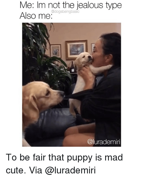 Cute, Jealous, and Memes: Me: Im not the jealous type  Also me:  @dogsbeingbasic  @lurademiri To be fair that puppy is mad cute. Via @lurademiri