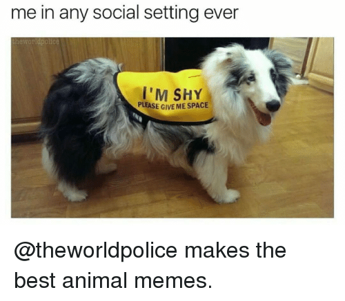 Animation Meme: me in any social setting ever  the Worldpolice  I'M SHY  PLEASE G  MESPACE @theworldpolice makes the best animal memes.