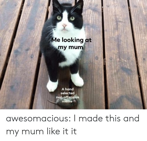 Selected: Me looking at  my mum  A hand  selected  non-offensive  meme awesomacious:  I made this and my mum like it it