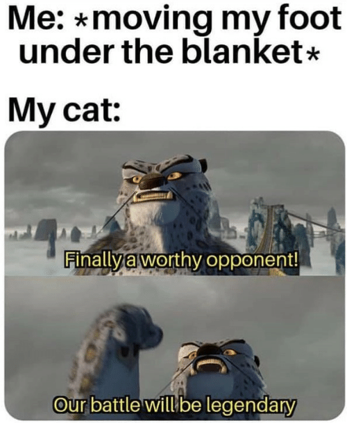 Cat, Foot, and Legendary: Me: *moving my foot  under the blanket*  My cat:  Finally à worthy opponent  our battle willube legendary