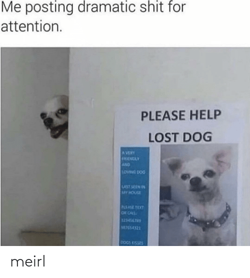 House: Me posting dramatic shit for  attention.  PLEASE HELP  LOST DOG  AVERY  FRENDLY  AND  LOWNG DOG  LAST SEEN IN  MY HOUSE  PLEASE TEXT  OR CALL  123456765  M755-4321  DOGS KISSES meirl