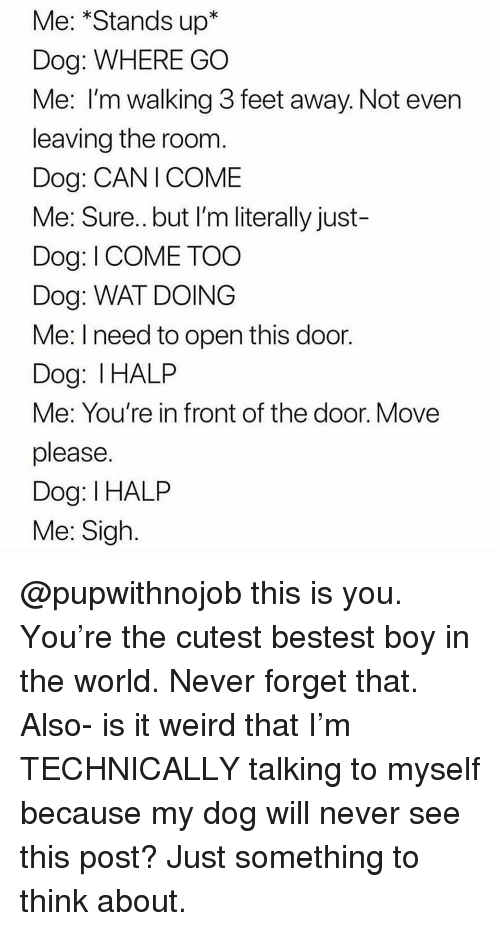 Funny, Wat, and Weird: Me: *Stands up*  Dog: WHERE GO  Me: I'm walking 3 feet away. Not even  leaving the room.  Dog: CANICOME  Me: Sure..but I'm literally just-  Dog: I COME TOO  Dog: WAT DOING  Me: I need to open this door  Dog: IHALP  Me: You're in front of the door. Move  please  Dog: I HALP  Me: Sigh. @pupwithnojob this is you. You're the cutest bestest boy in the world. Never forget that. Also- is it weird that I'm TECHNICALLY talking to myself because my dog will never see this post? Just something to think about.