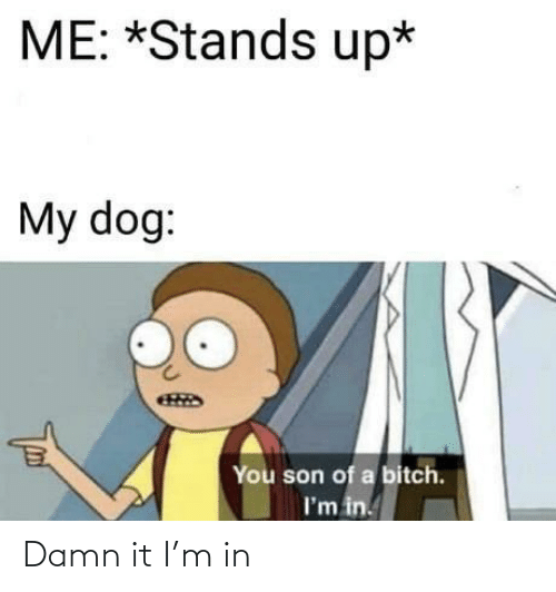 Bitch, Dog, and You: ME: *Stands up*  My dog:  You son of a bitch.  I'm in. Damn it I'm in