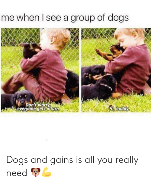 gains: me when Il see a group of dogs  Don't worn  everyone gets a turo  Hi buddy Dogs and gains is all you really need 🐶💪