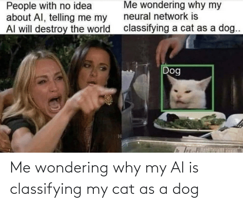 wondering: Me wondering why my AI is classifying my cat as a dog