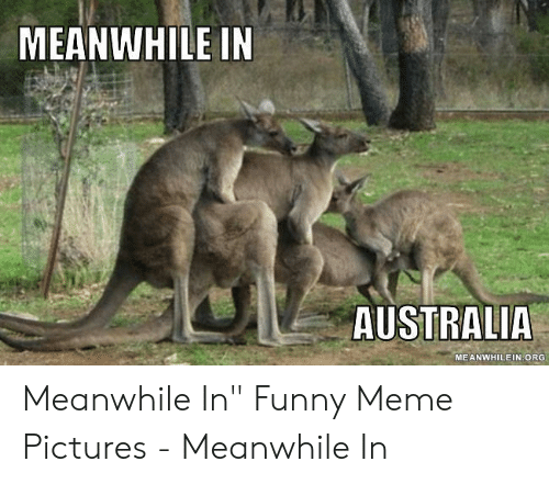 "Funny, Meme, and Australia: MEANWHILE IN  AUSTRALIA  MEANWHILEIN ORG Meanwhile In"" Funny Meme Pictures - Meanwhile In"