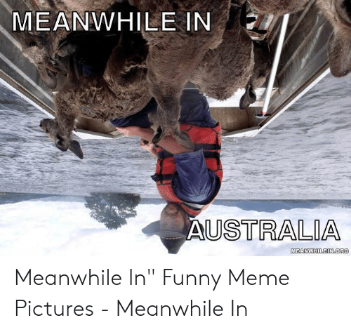 "Funny, Meme, and Pictures: MEANWHILE IN  USTRALIA  MEANWHILEIN OR Meanwhile In"" Funny Meme Pictures - Meanwhile In"