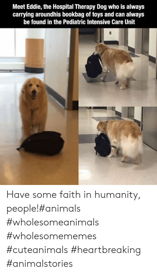 Animals, Hospital, and Toys: Meet Eddie, the Hospital Therapy Dog who is always  carrying aroundhis bookbag of toys and can always  be found in the Pediatric Intensive Care Unit Have some faith in humanity, people!#animals #wholesomeanimals #wholesomememes #cuteanimals #heartbreaking #animalstories