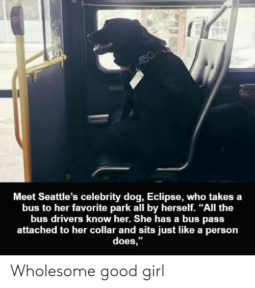 "Eclipse, Girl, and Good: Meet Seattle's celebrity dog, Eclipse, who takes a  bus to her favorite park all by herself. ""All the  bus drivers know her. She has a bus pass  attached to her collar and sits just like a person  does,"" Wholesome good girl"