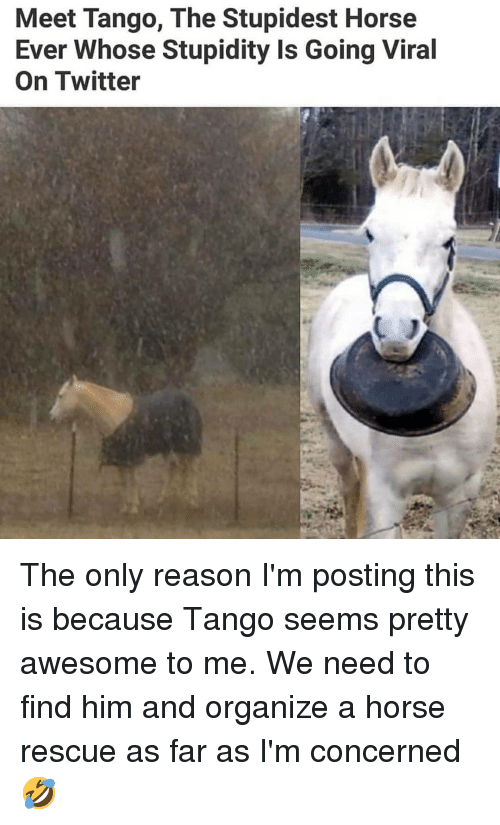 Memes, Twitter, and Horse: Meet Tango, The Stupidest Horse  Ever Whose Stupidity Is Going Viral  On Twitter The only reason I'm posting this is because Tango seems pretty awesome to me. We need to find him and organize a horse rescue as far as I'm concerned 🤣