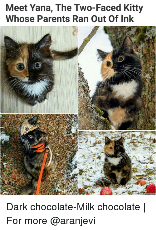Two-Face: Meet Yana, The Two-Faced Kitty  Whose Parents Ran Out Of Ink Dark chocolate-Milk chocolate   For more @aranjevi