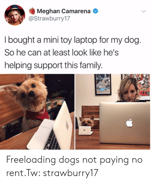 Dogs, Family, and Laptop: Meghan Camarena  @Strawburry17  I bought a mini toy laptop for my dog  So he can at least look like he's  helping support this family Freeloading dogs not paying no rent.Tw: strawburry17
