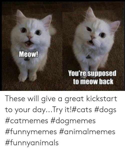 Try It: Meow!  You're supposed  to meow back These will give a great kickstart to your day...Try it!#cats #dogs #catmemes #dogmemes #funnymemes #animalmemes #funnyanimals