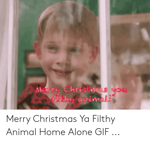 Merry Christmas You Filthy Animal Gif.Merry Christmas Ya Filthy Animal Home Alone Gif Being