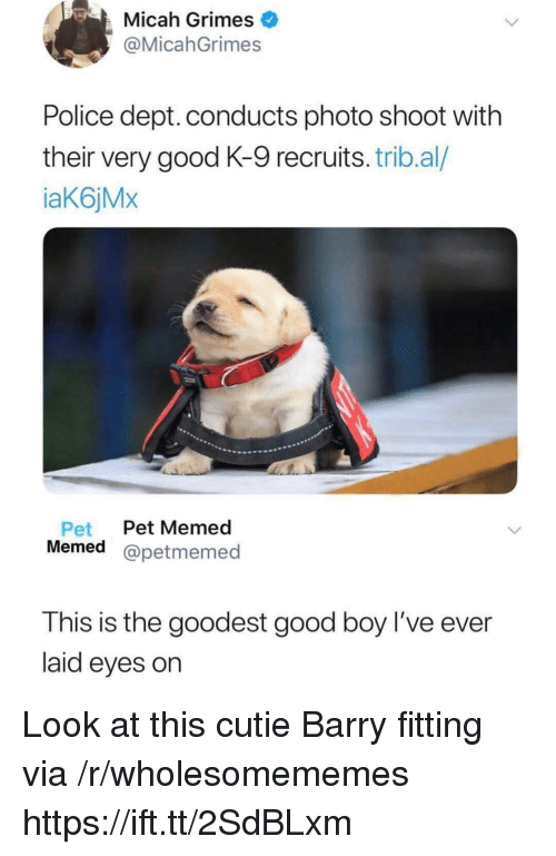 Police, Good, and Boy: Micah Grimes  @MicahGrimes  Police dept. conducts photo shoot with  their very good K-9 recruits. trib.al/  aK6jMx  Pet Pet Memed  Memed @petmemed  This is the goodest good boy l've ever  laid eyes on Look at this cutie Barry fitting via /r/wholesomememes https://ift.tt/2SdBLxm